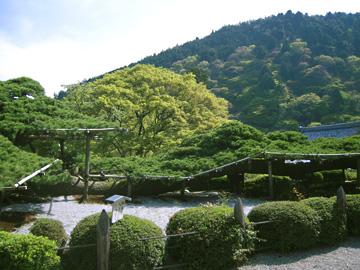 yosimune01.jpg